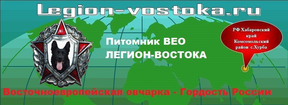 legion-vostoka.ru